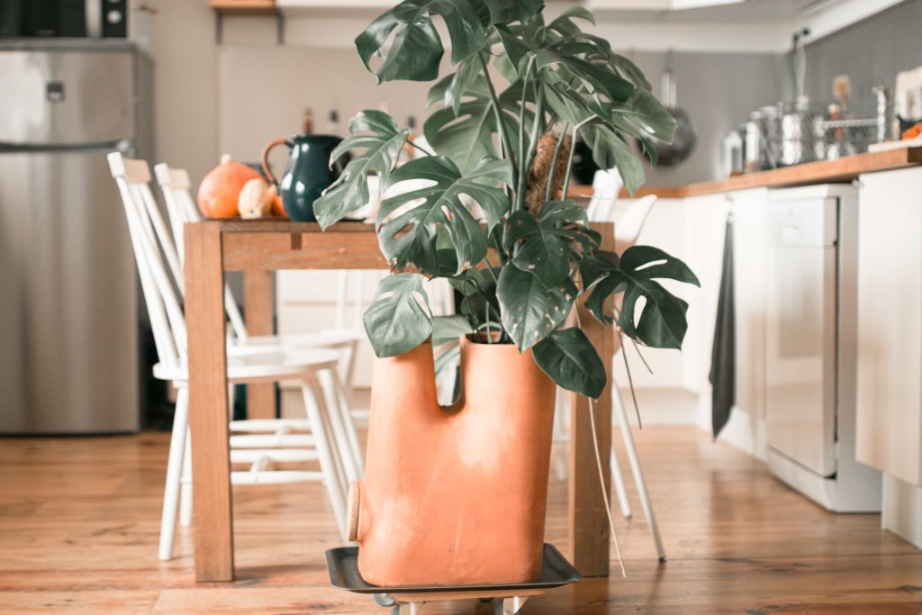 Pot de fleurs composteur dans une cuisine dinatoire